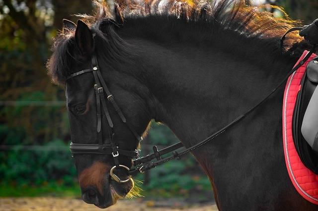 gebiss fürs pferd
